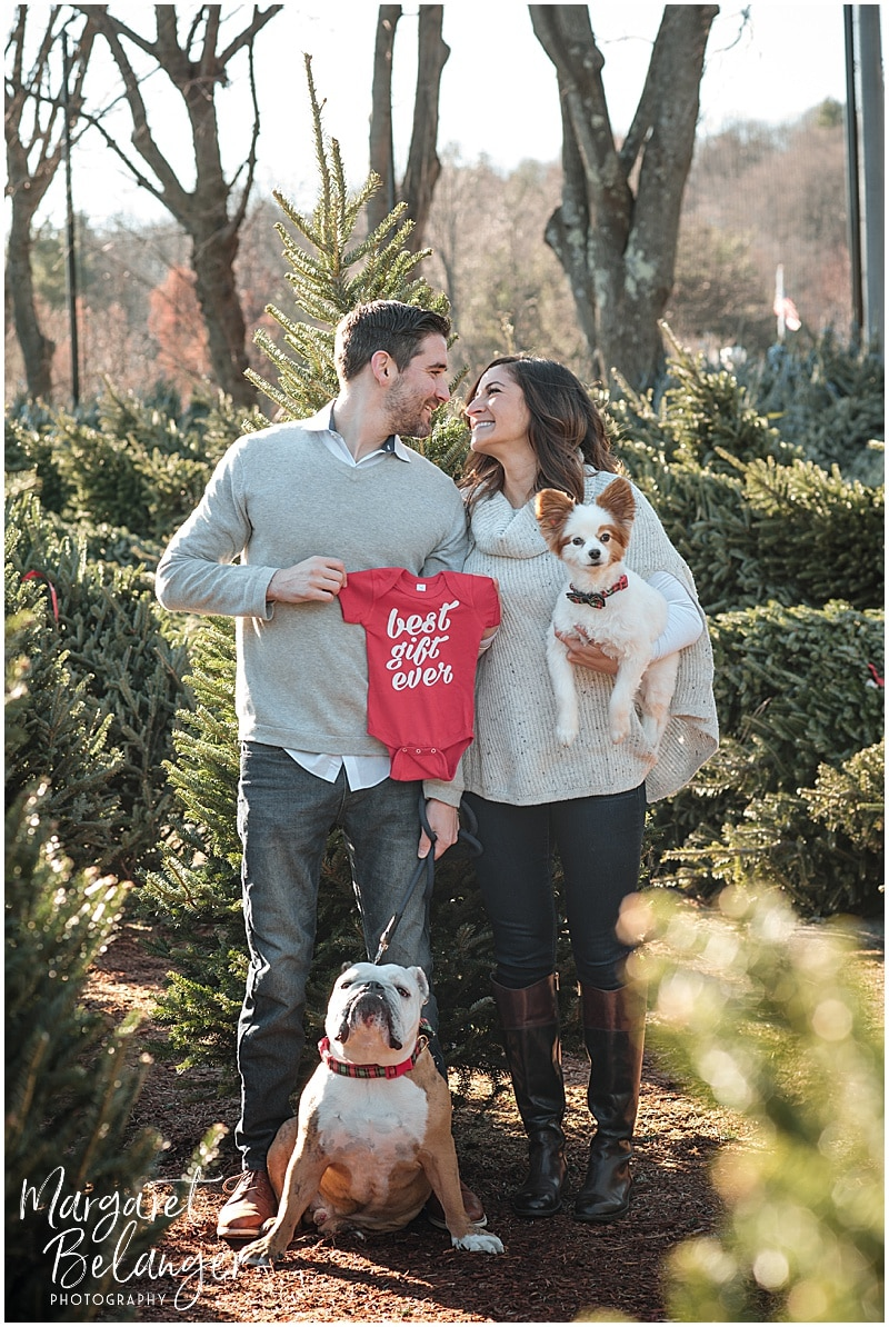 Mahoney's Winchester pregnancy announcement, family portraits among the Christmas trees, with their bulldog and papillon